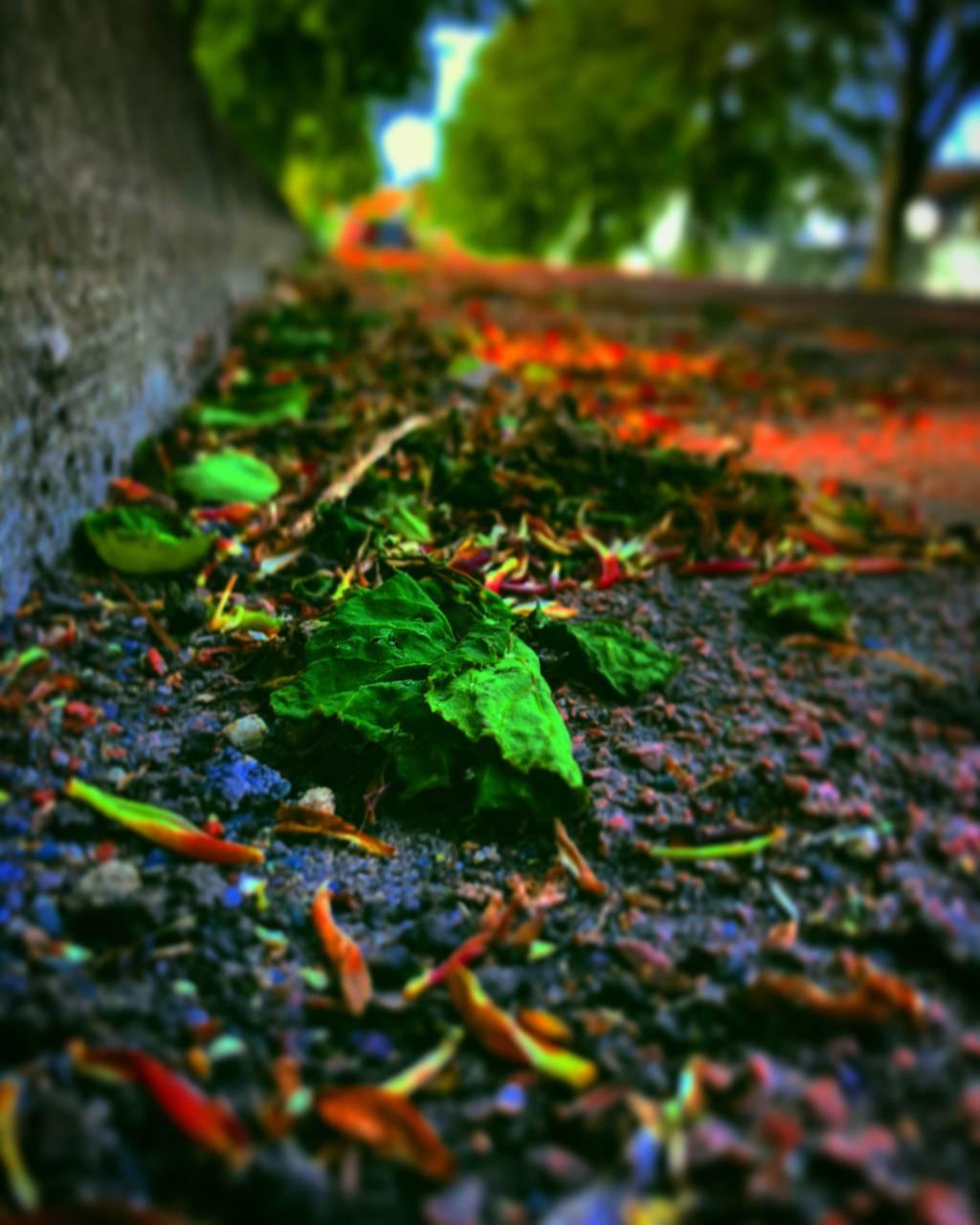 L*D Leaf Visuals