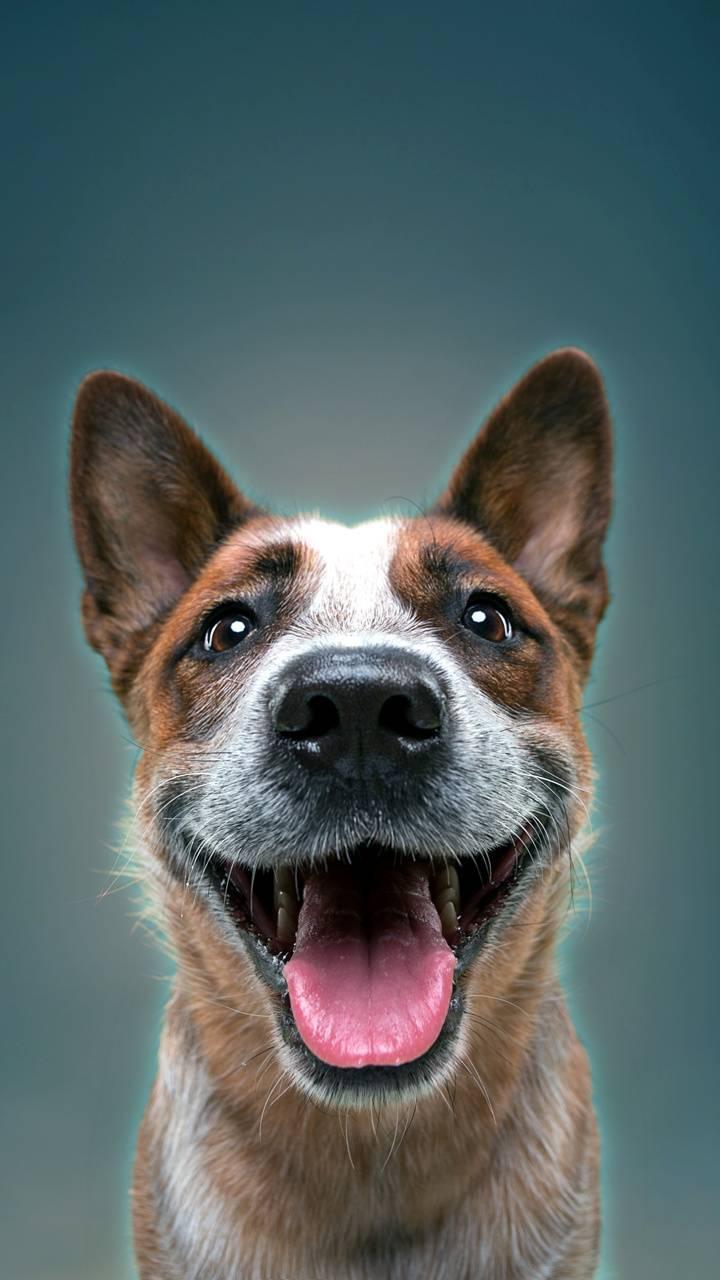 dog face 3