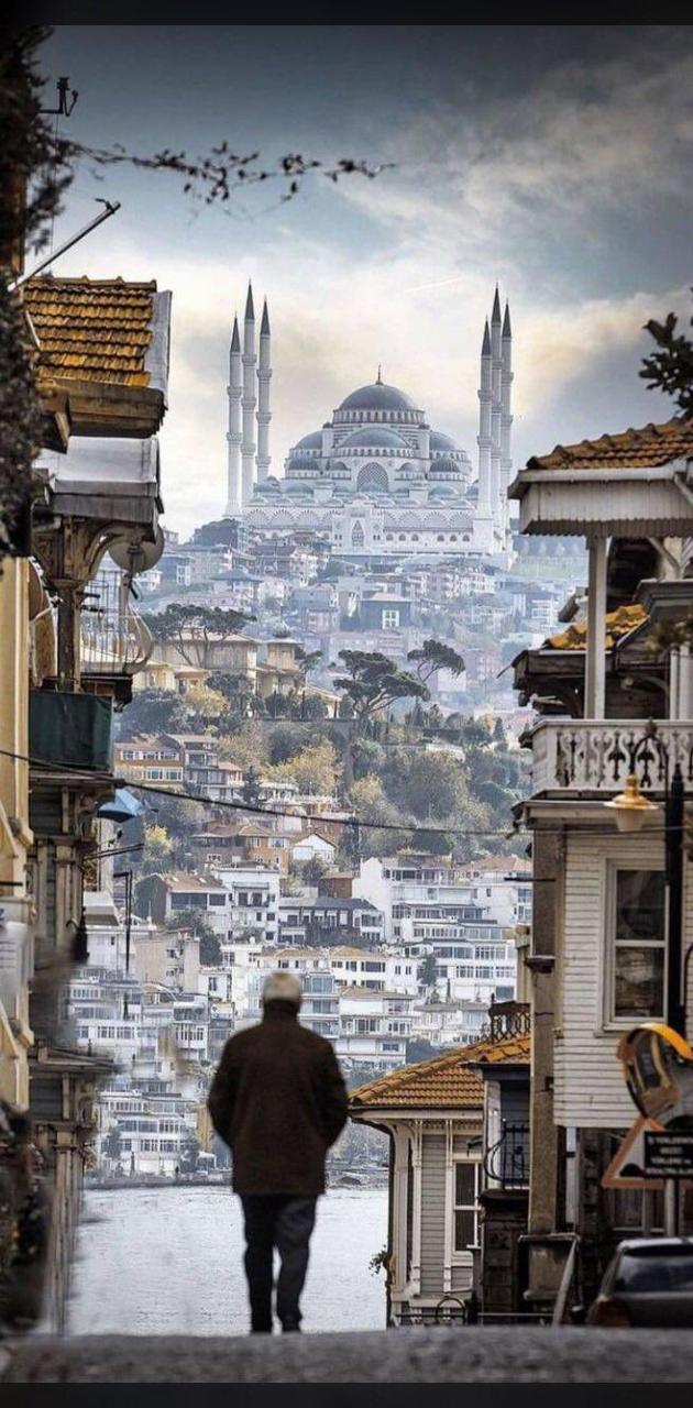Turkeys street