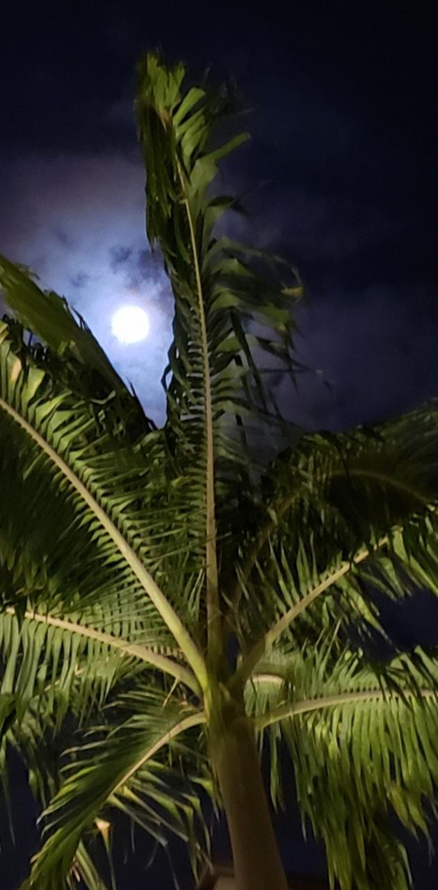 Cali moon