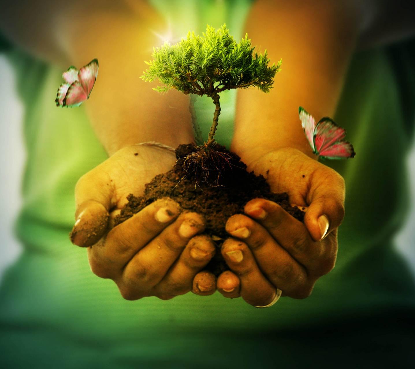 hands of earth