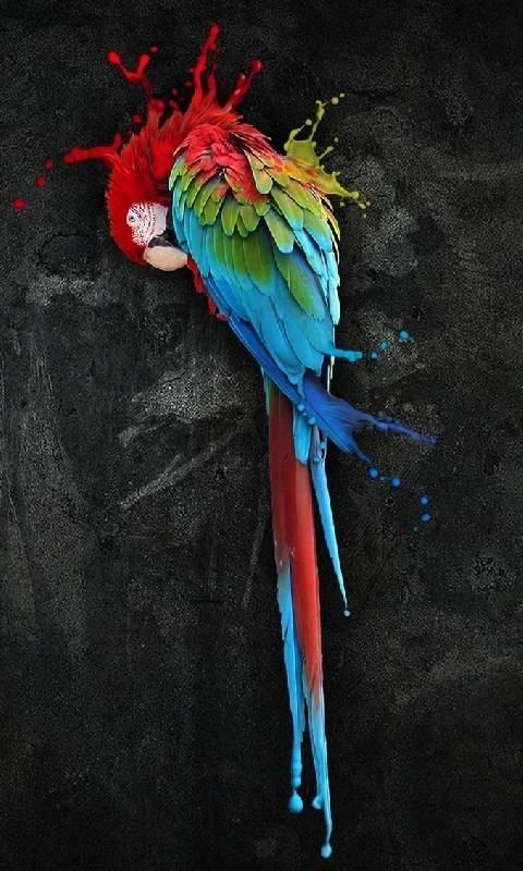 Parrot Splash 2