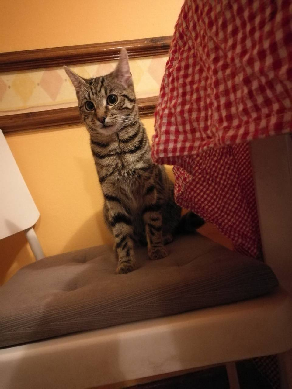Kitten At The Table