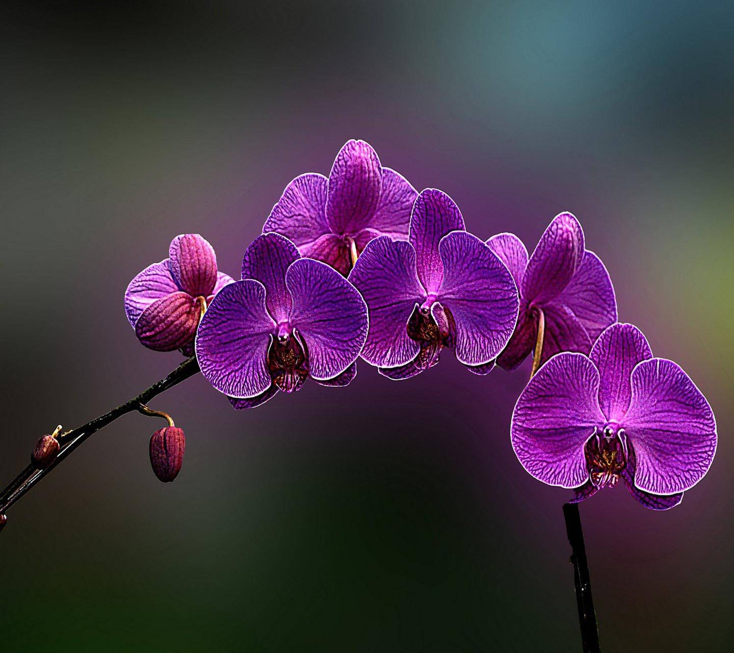 Flower Orchid Purple