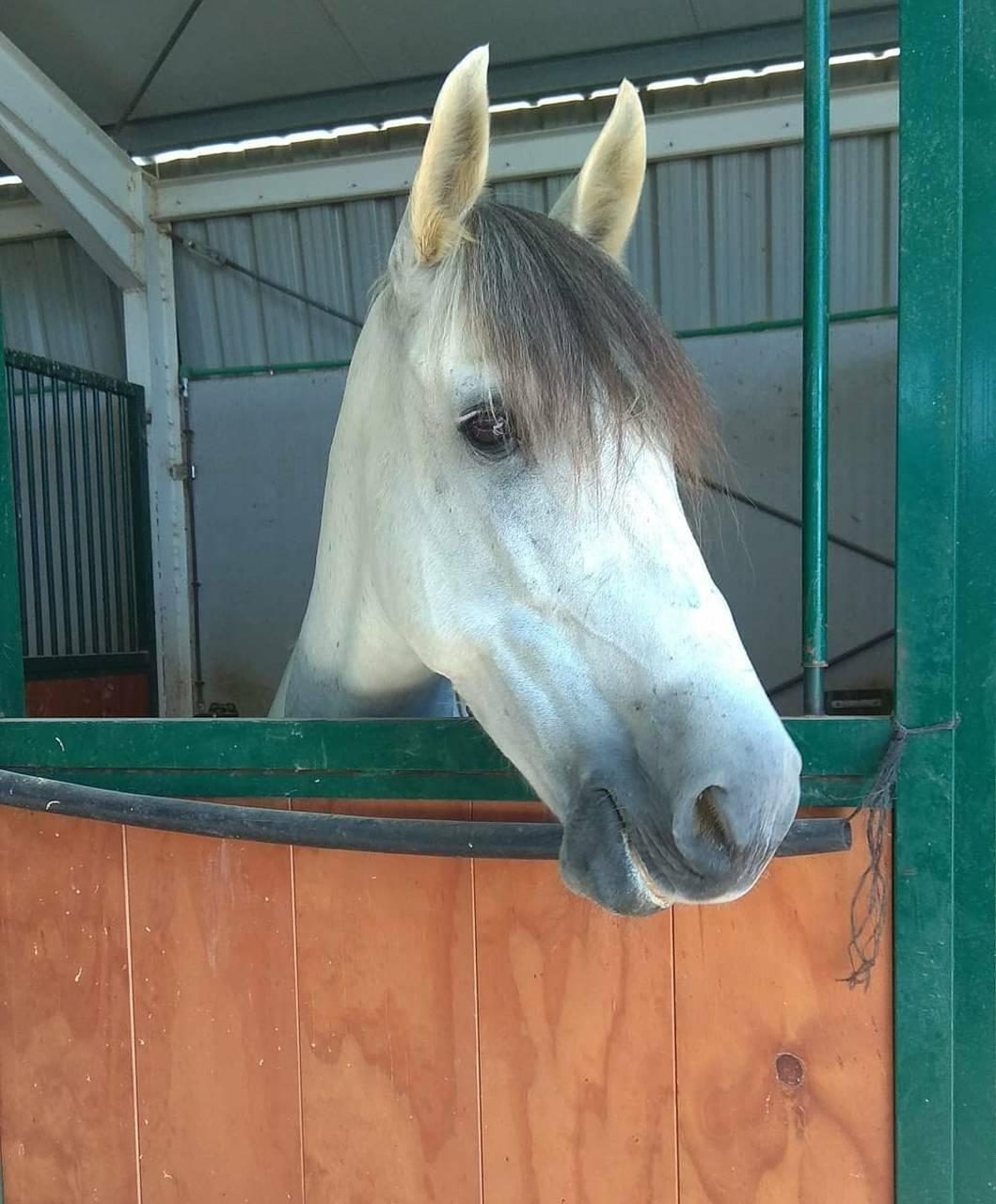 Fondo de caballo