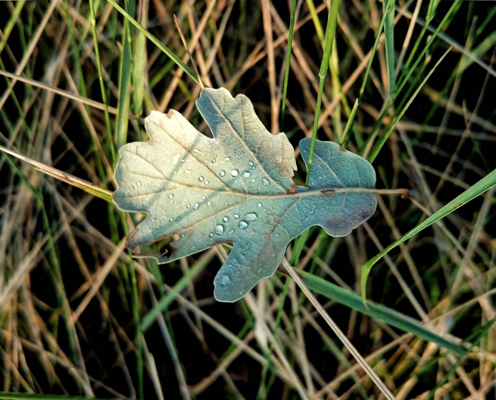 Leaf on grass