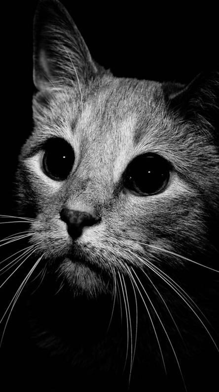 Cute cat 4K