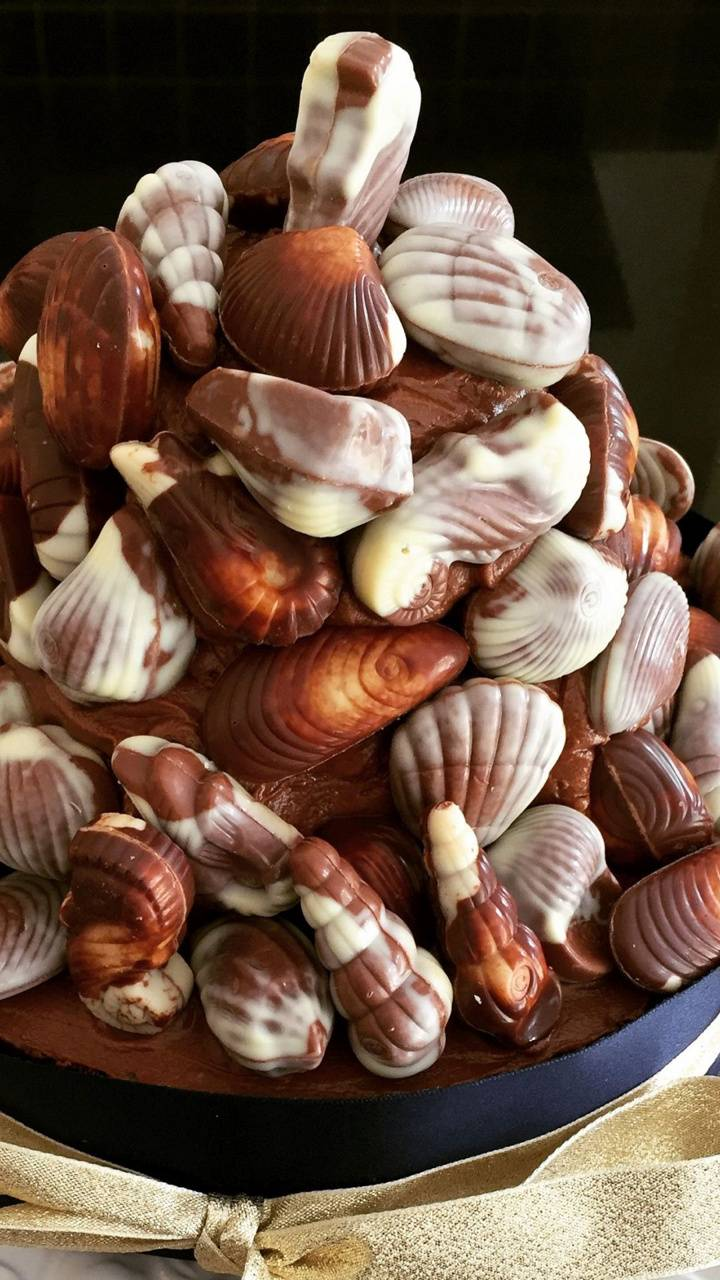 Praline Sea Shells