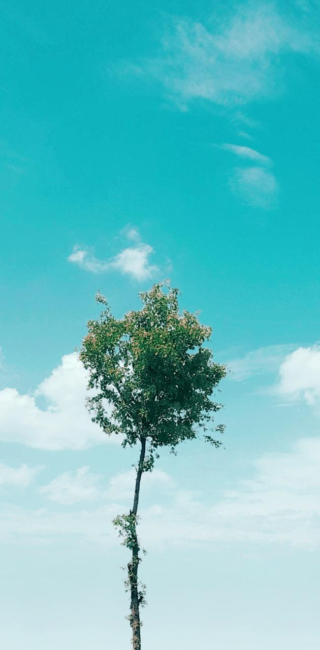 The sky and tree