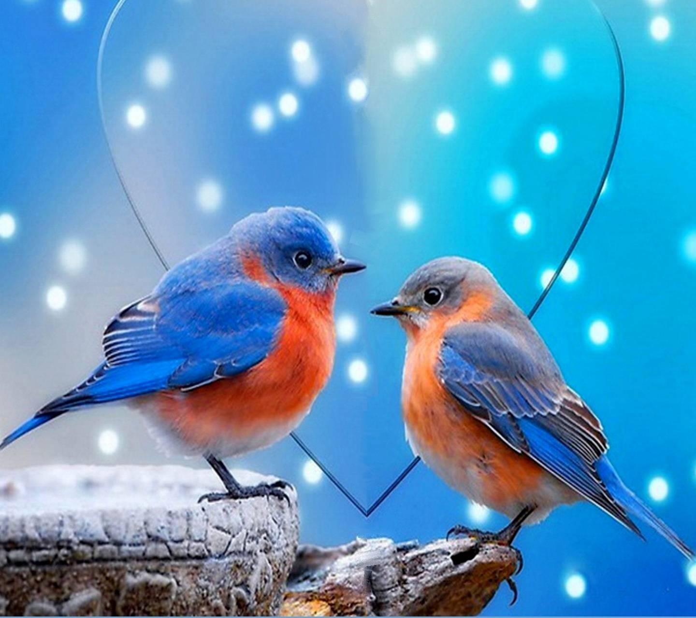 Love birds wallpaper by floradam - 6e ...