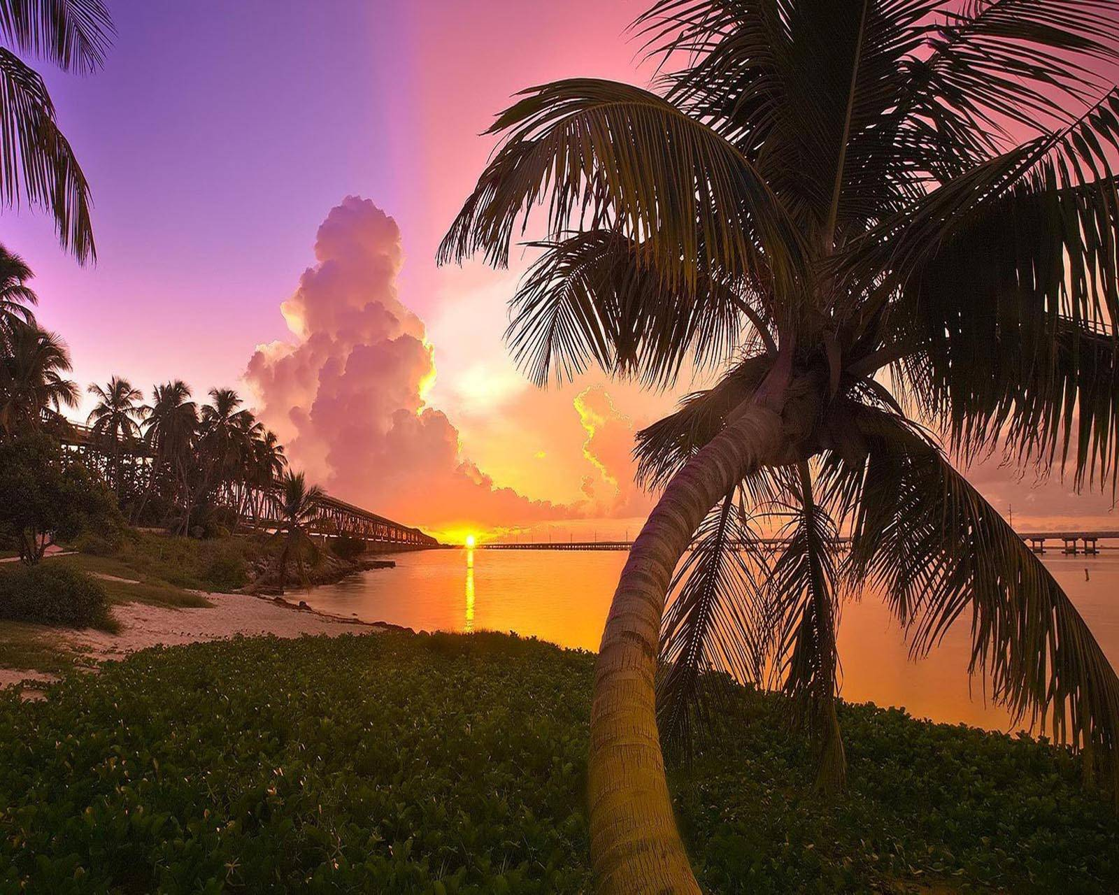 Palm Trees Park