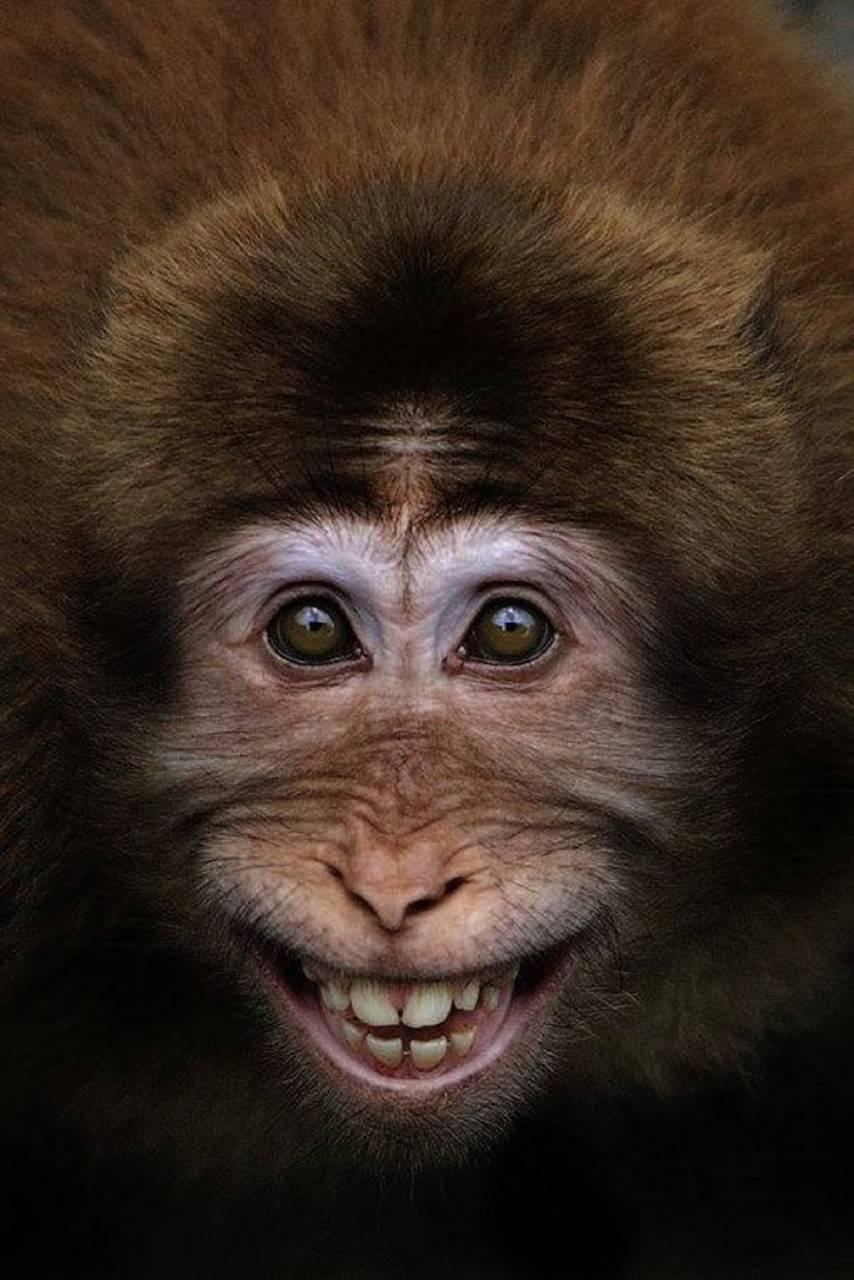 Fanny monkey