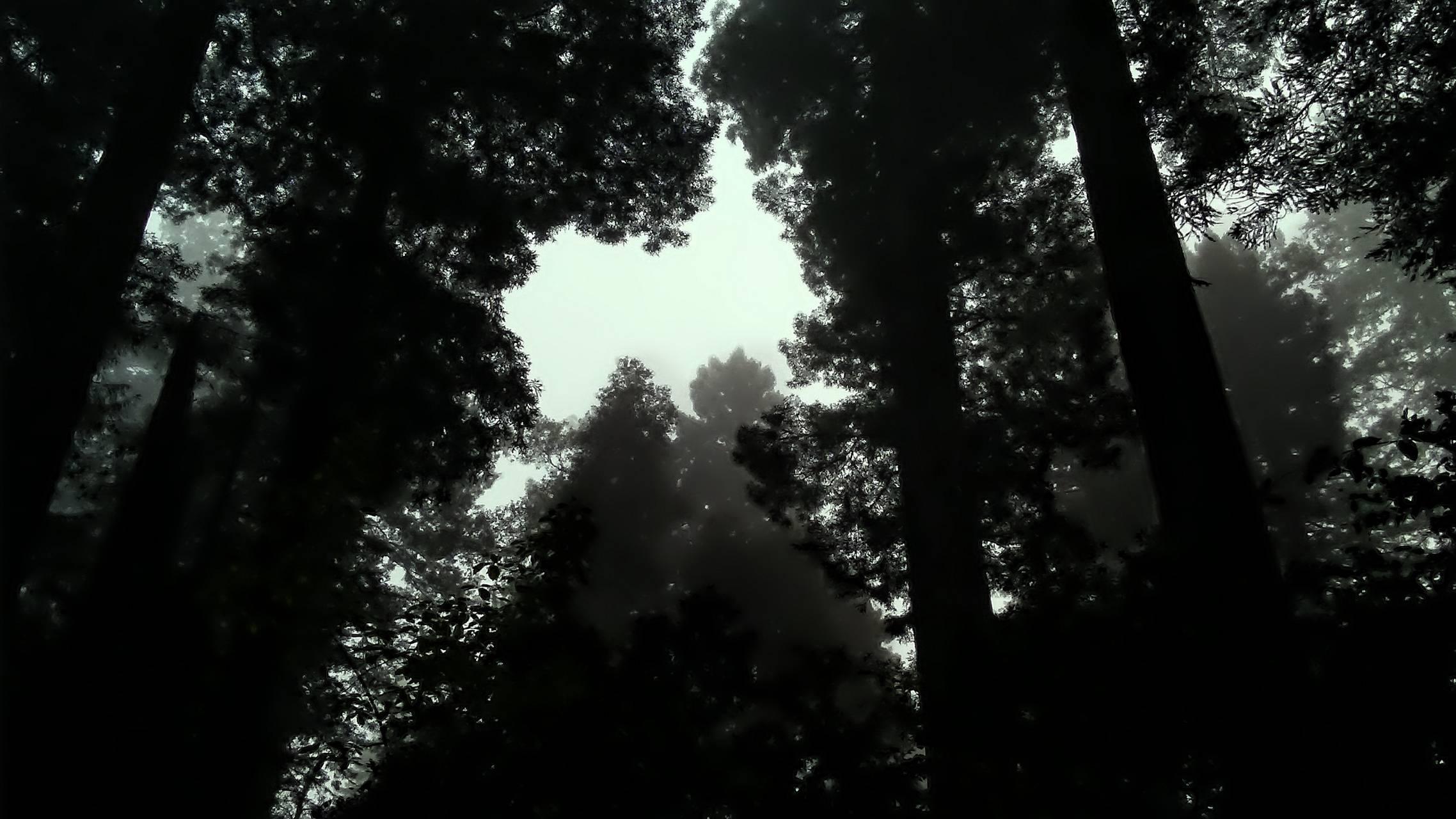 Deep in the Redwoods