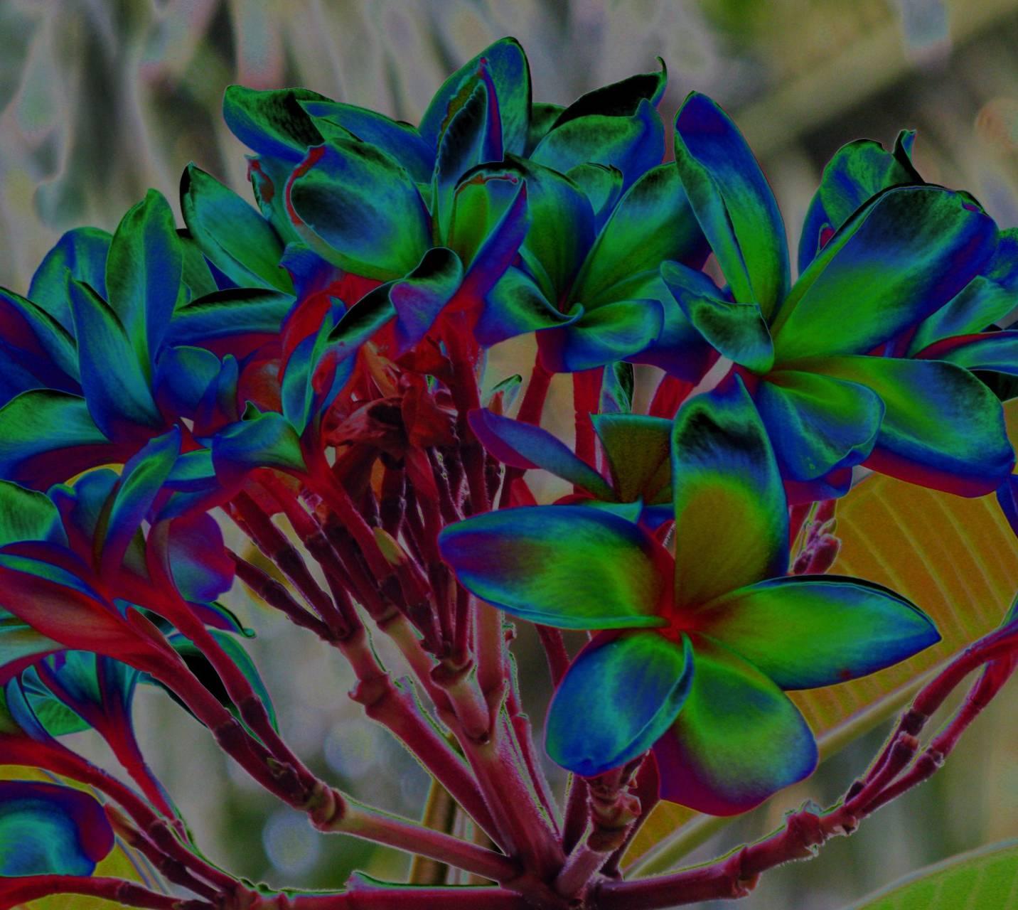 Funky Flowers 3