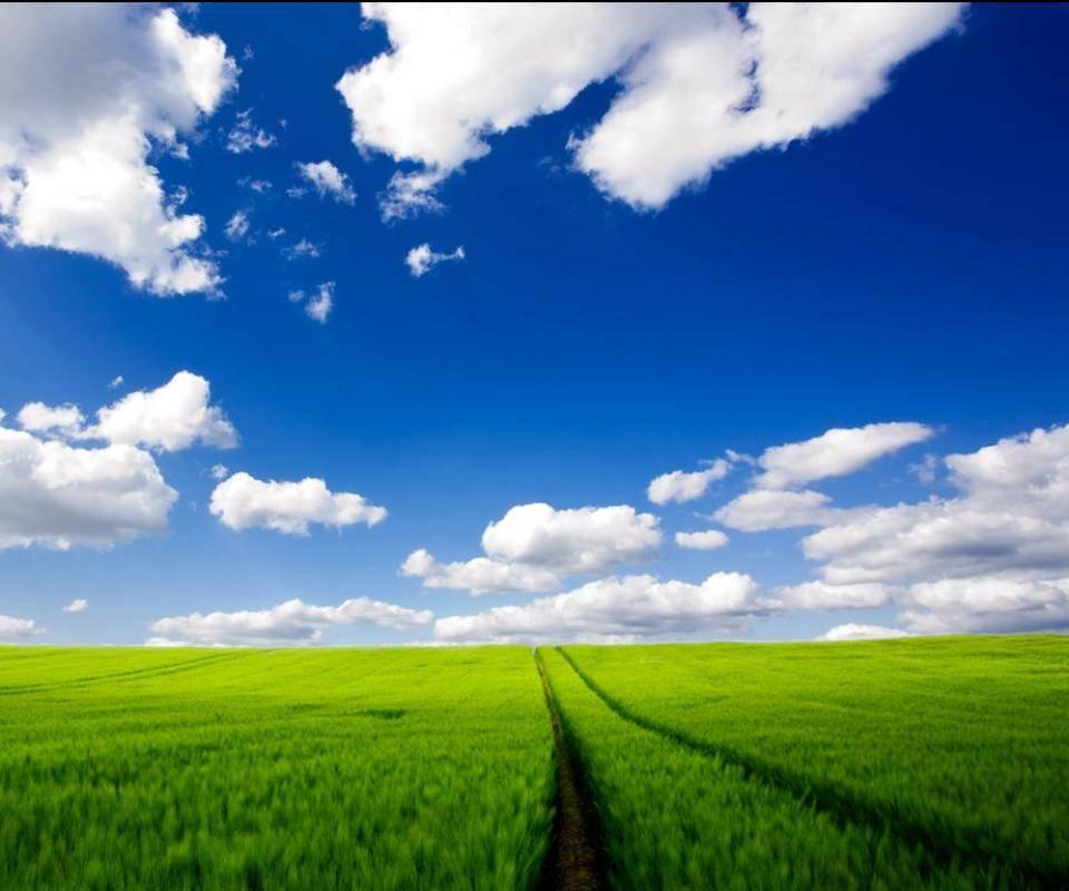 Green Field Sky