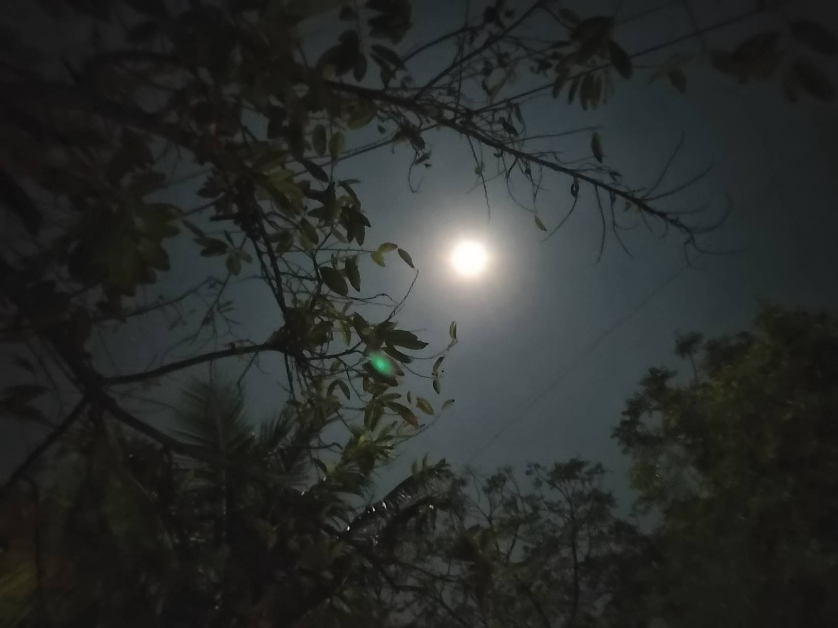Silence of night