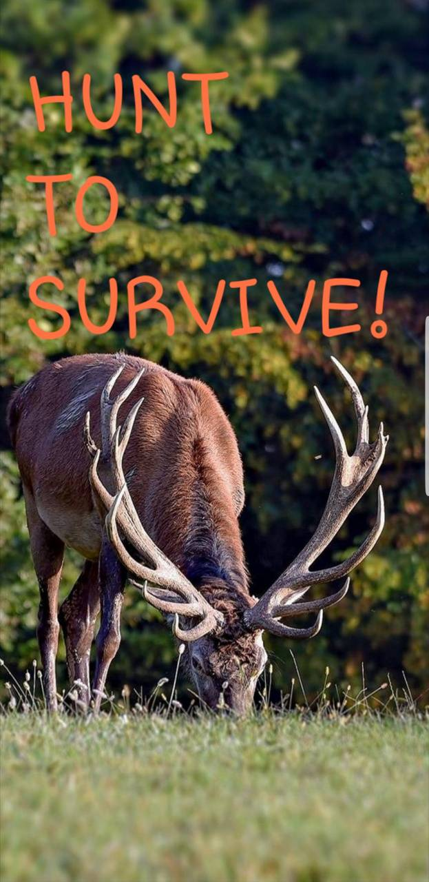 HUNT TO SURVIVE 2