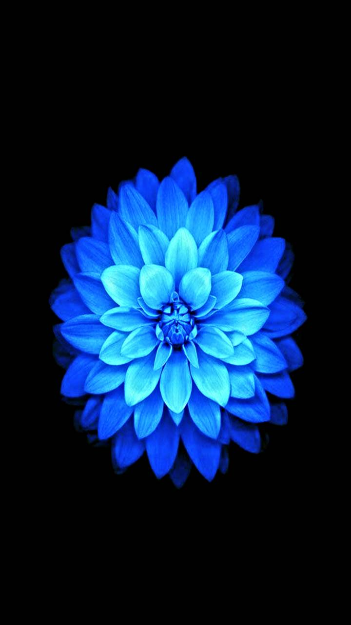 Hd Blue Lotus Flower Wallpaper By Mrzjekyll 35 Free On Zedge