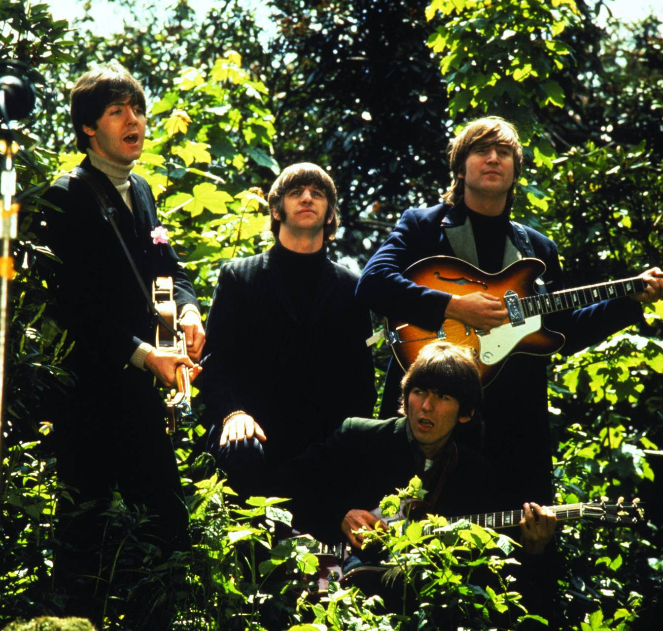 Beatles forest