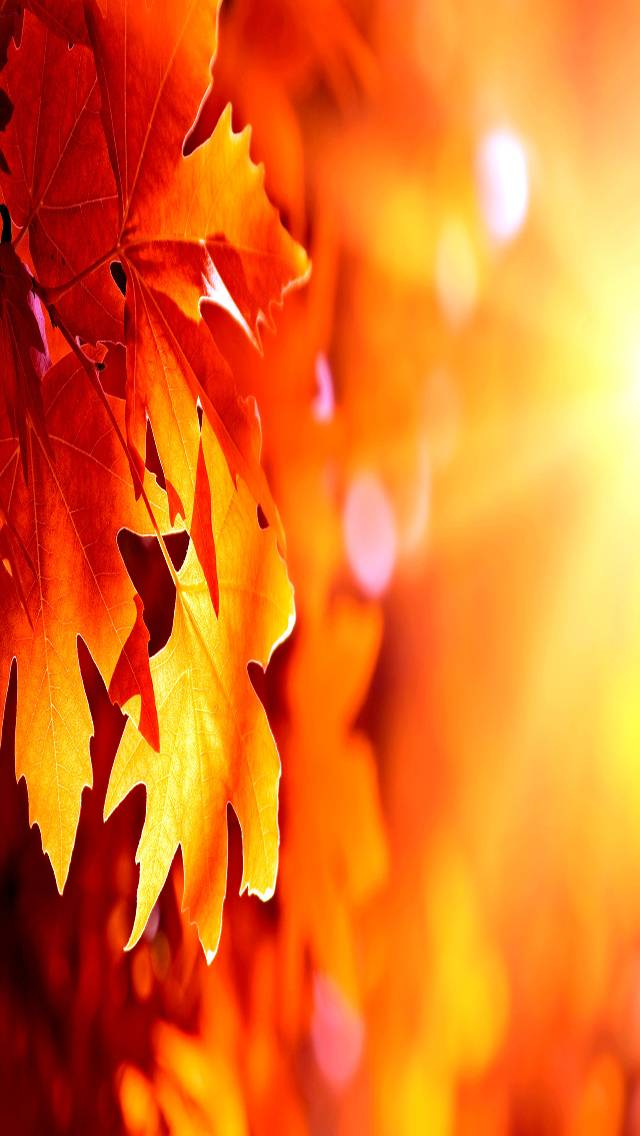 Autumn    Leafes
