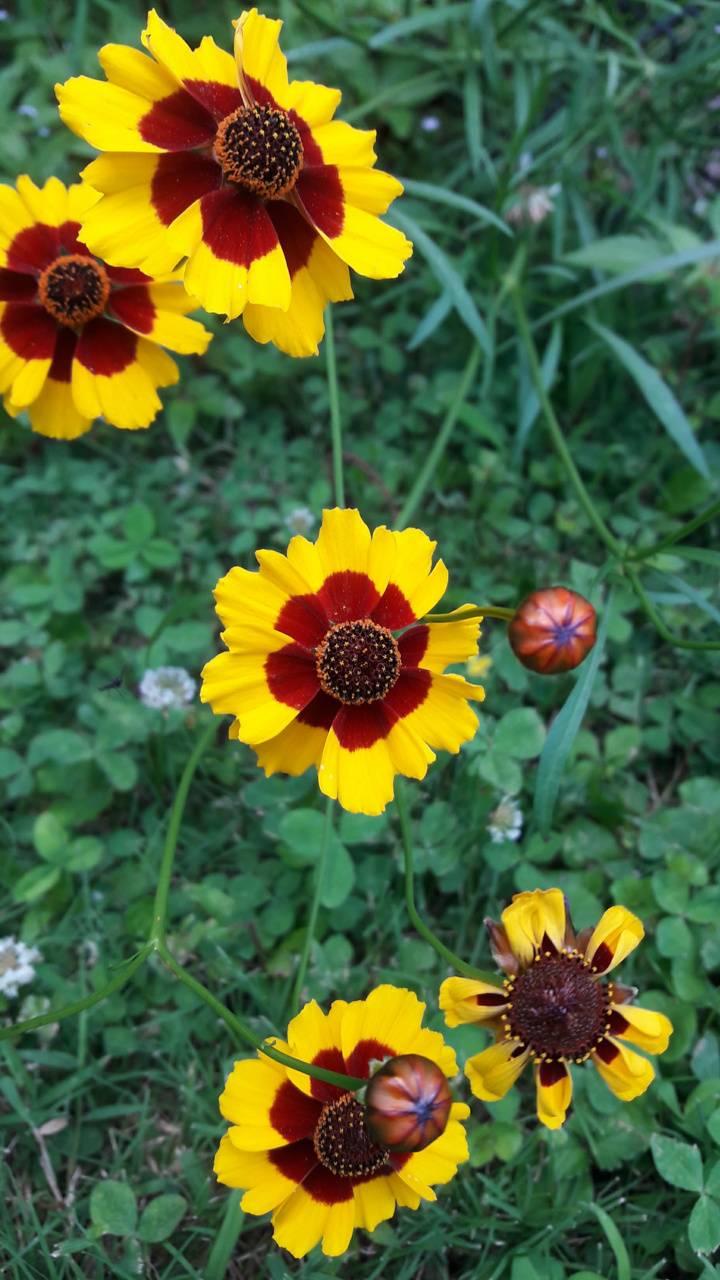 FloralSundry