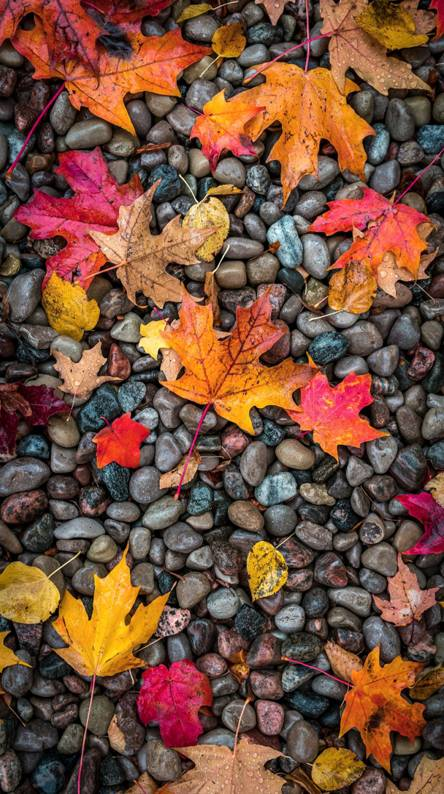 Fall Nature Ringtones And Wallpapers Free By Zedge