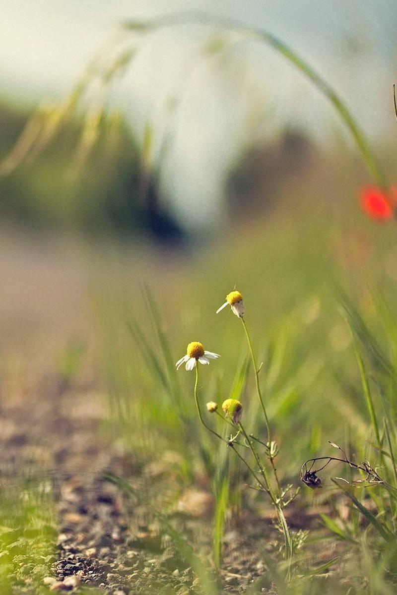 Natureflower