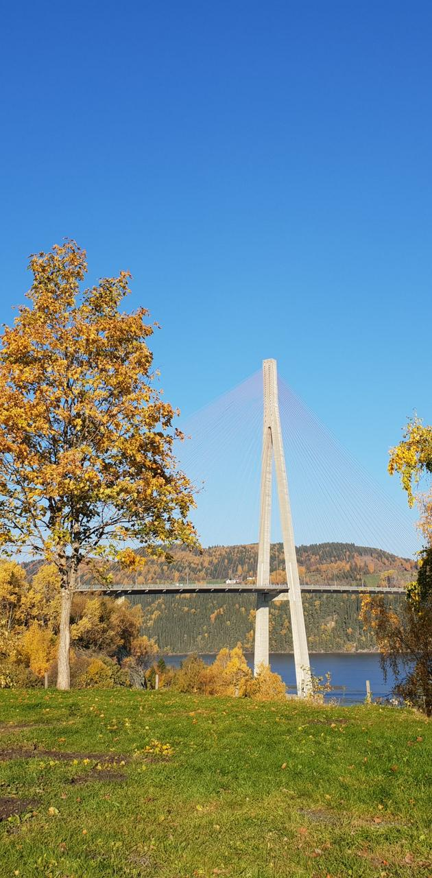 Bridge autumn