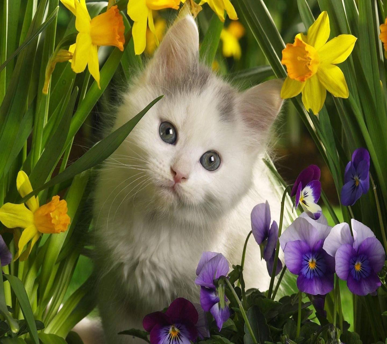 White kitty cat