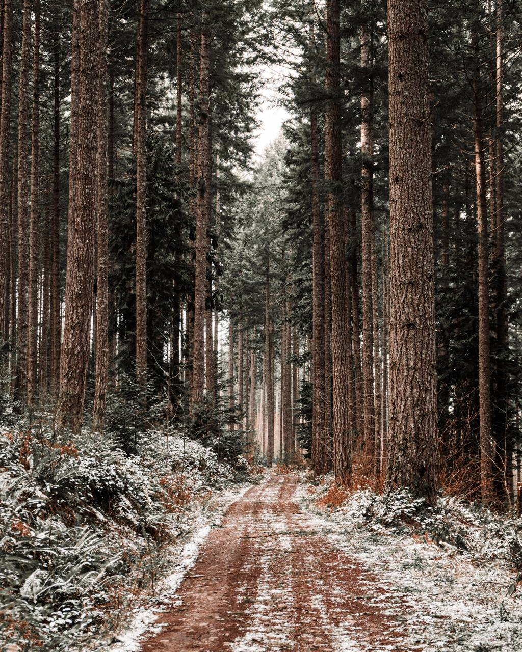 Path on Winter