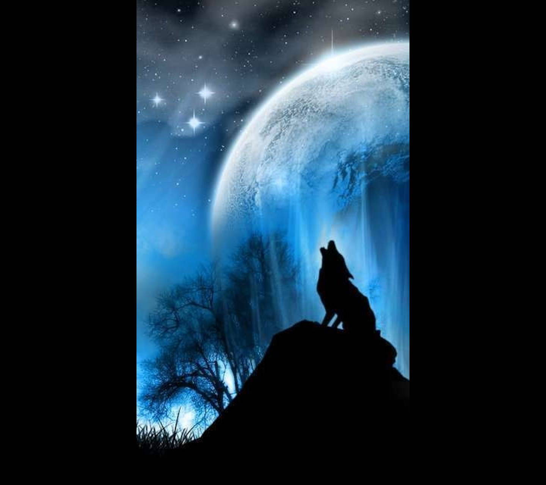 Rcwolf 1