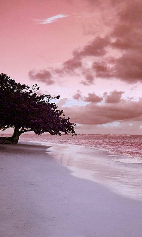 pink beach side