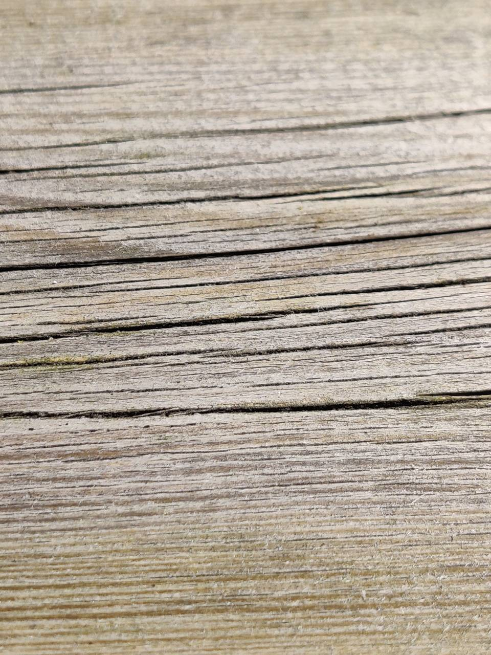 Withered woodgrain