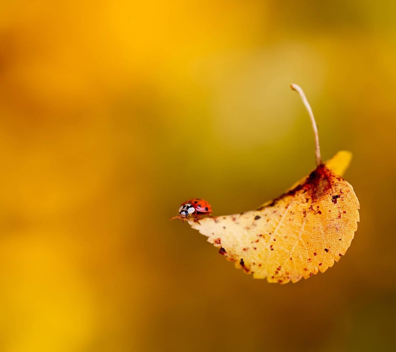 Ja Autumn