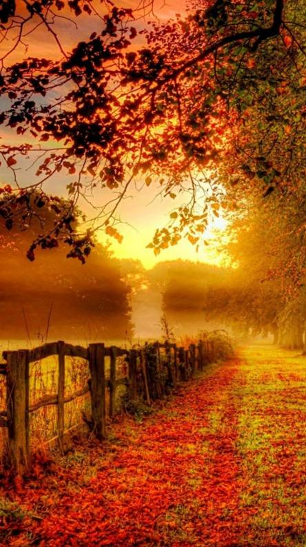 Fall Wallpapers Free By Zedge