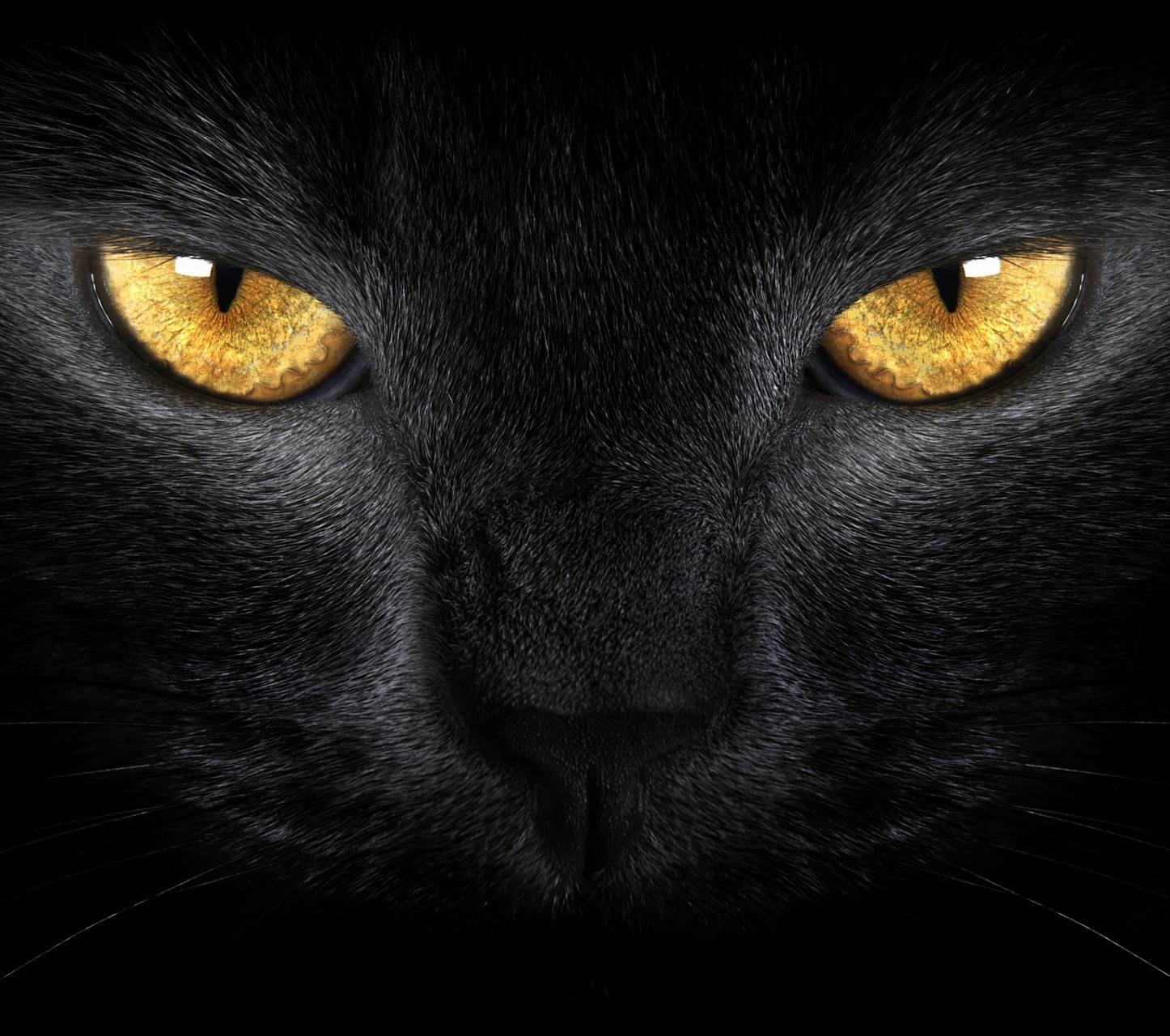 Black Cat Golden Eye