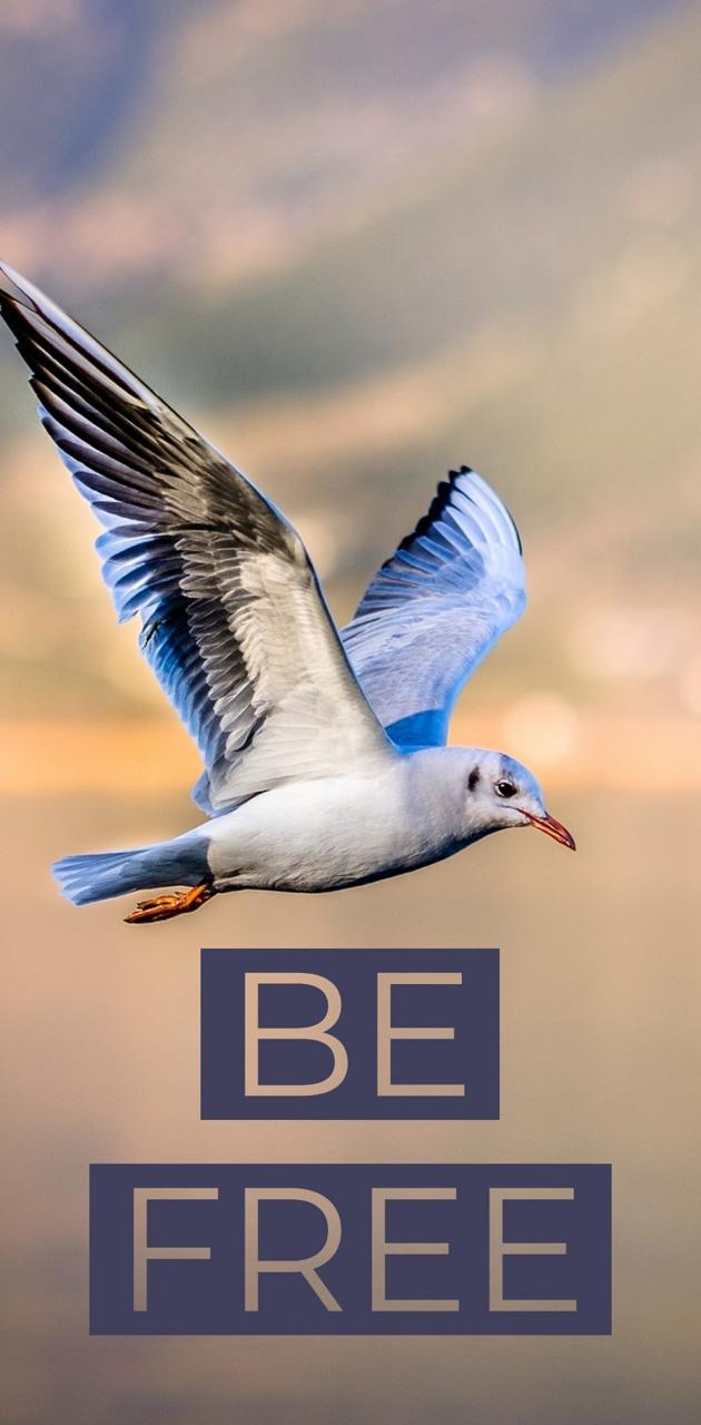 Be free like a bird