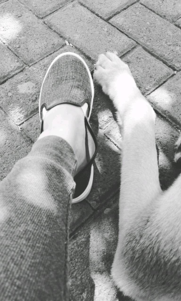 FootDog
