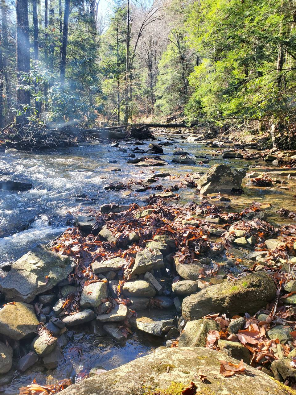 WV Mountain River