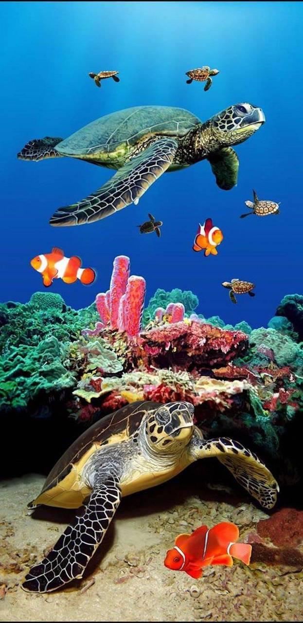 Sea Turtles Wallpaper By Marleyjudd808 84 Free On Zedge