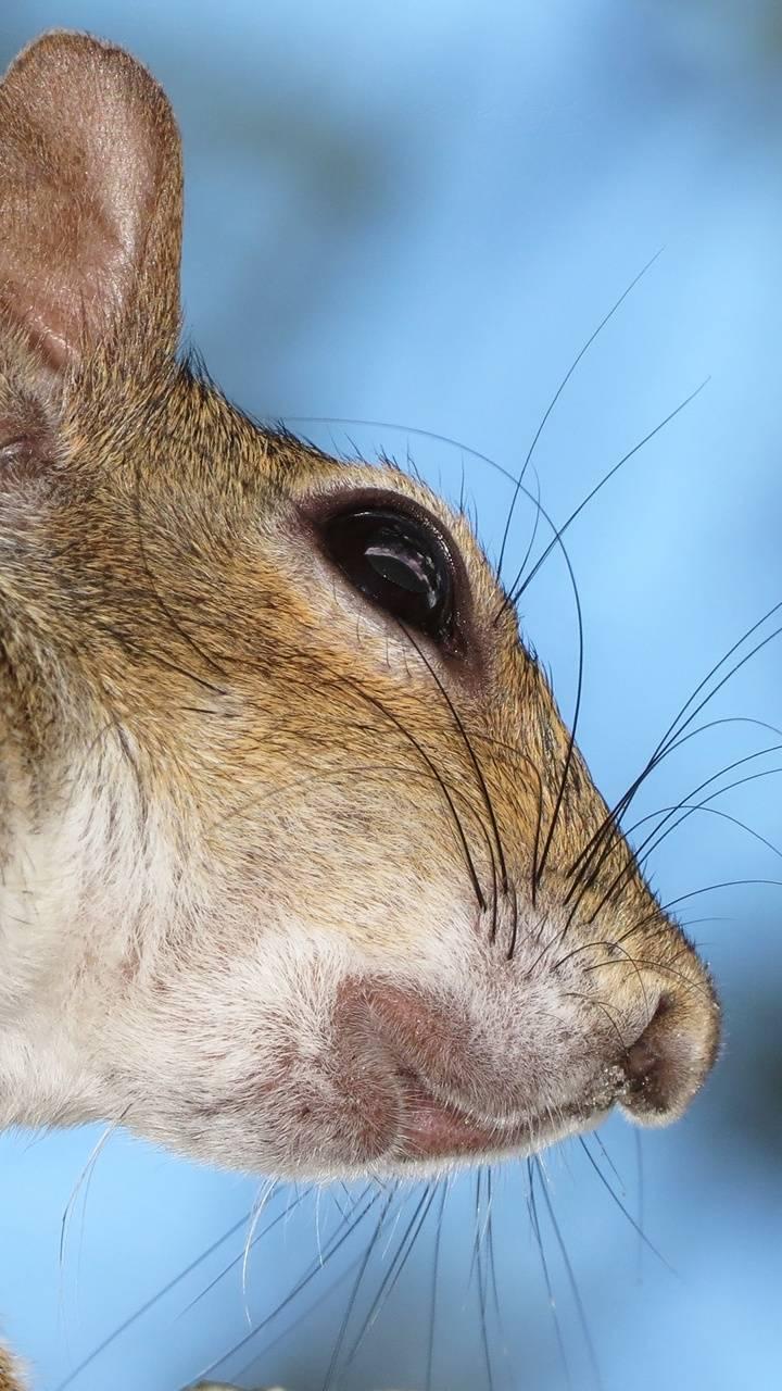 Vibrissae whiskers