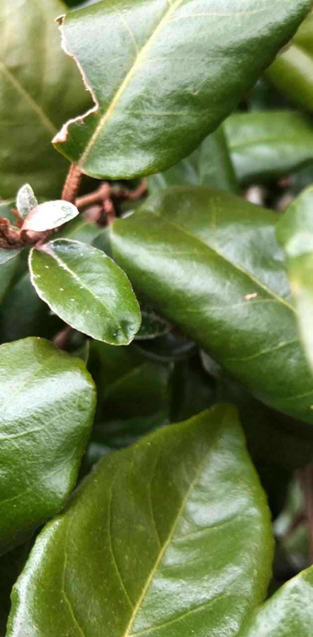 Bush of leaves