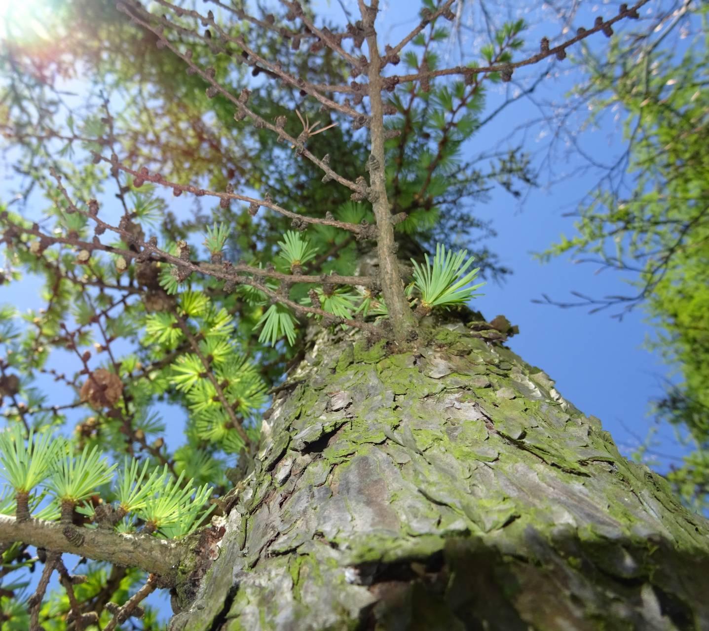 Nature HDR bark