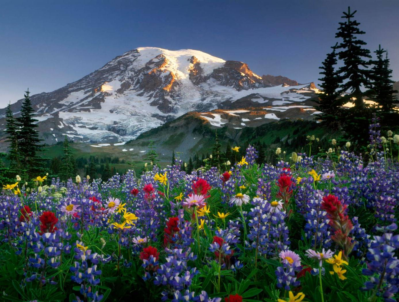 Mountains-flowers
