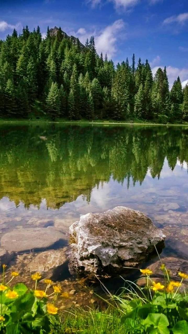 Reflecting Nature