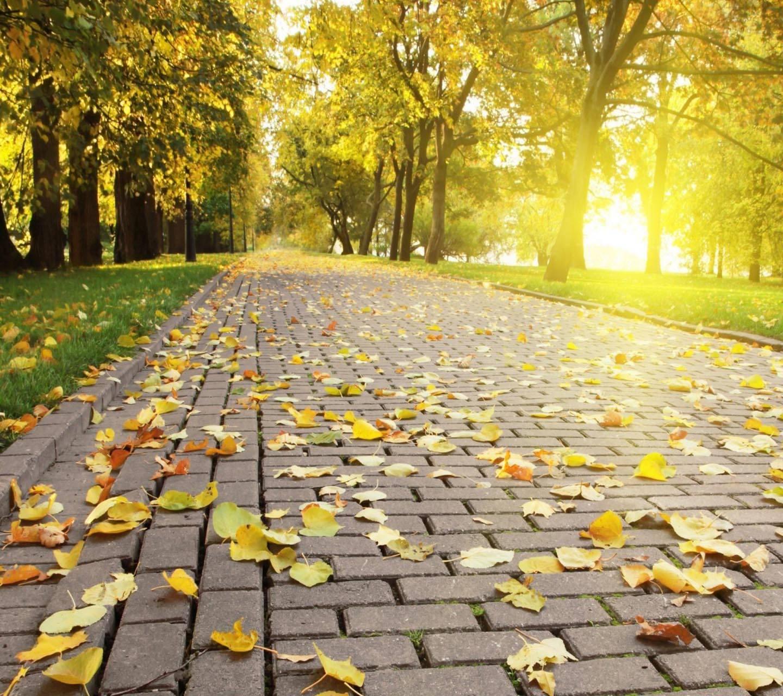 Tree Leaves sunlight