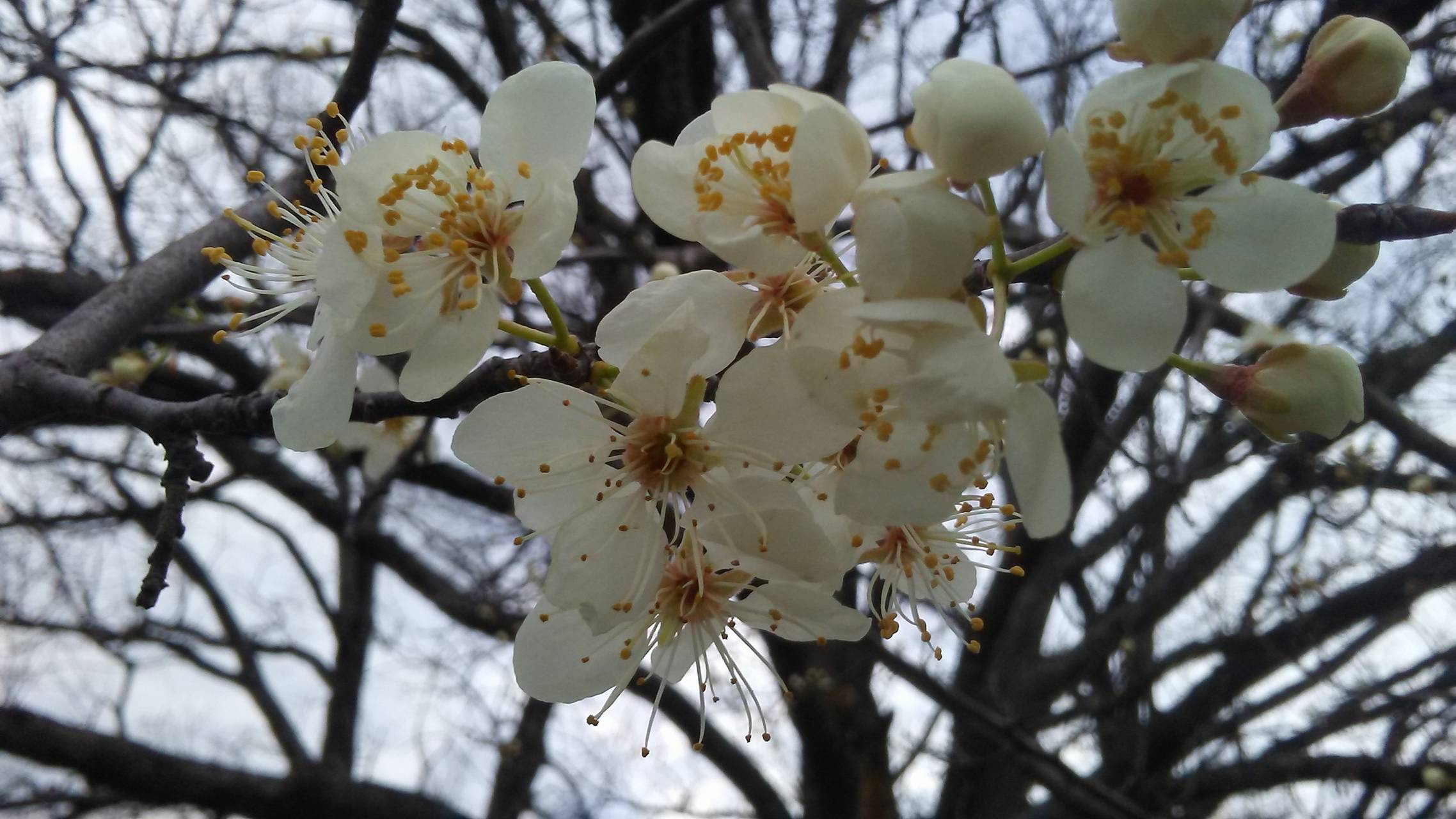 Oklahoma Spring