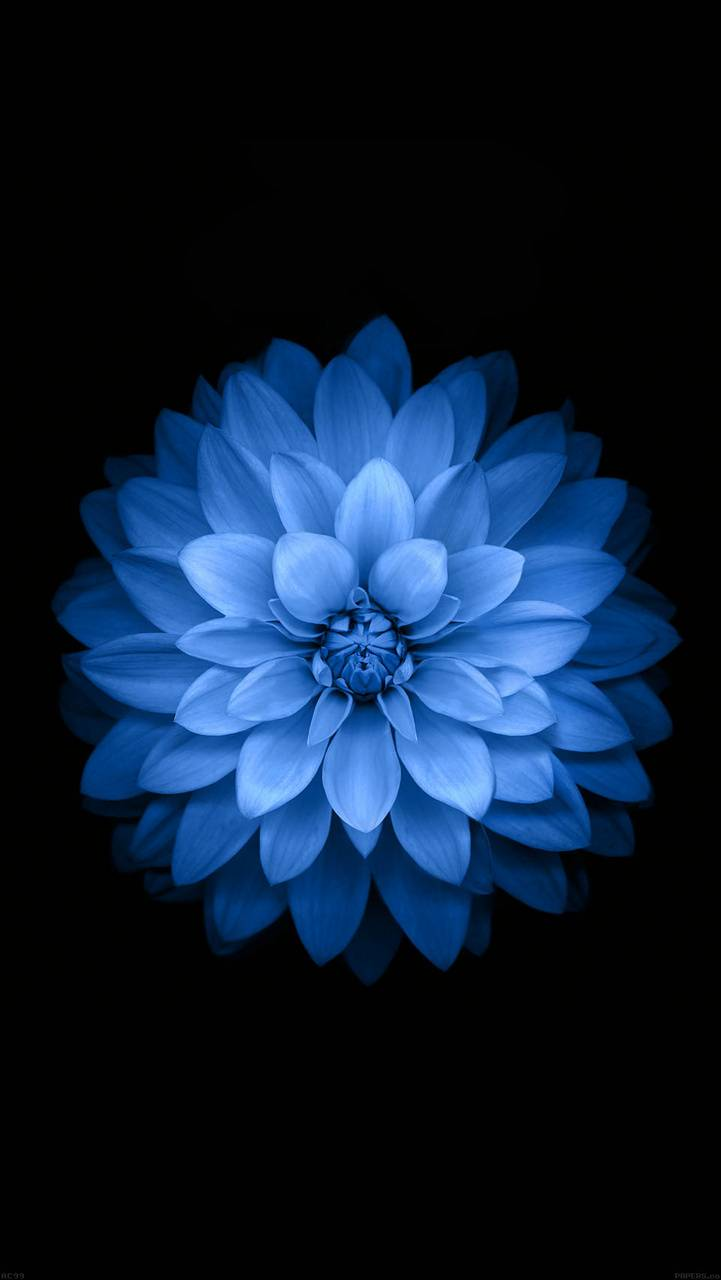 Hd Flower Design