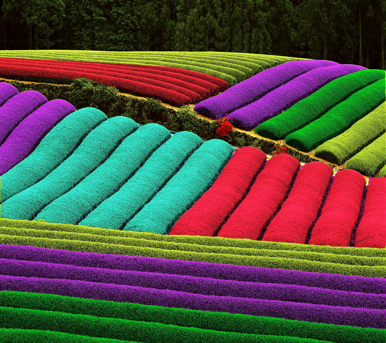 Color Tea
