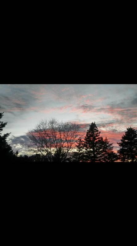 Treeline sunset